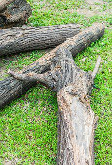 Tree, Dead, Nature, Desert, Dry, Death, Landscape, Old