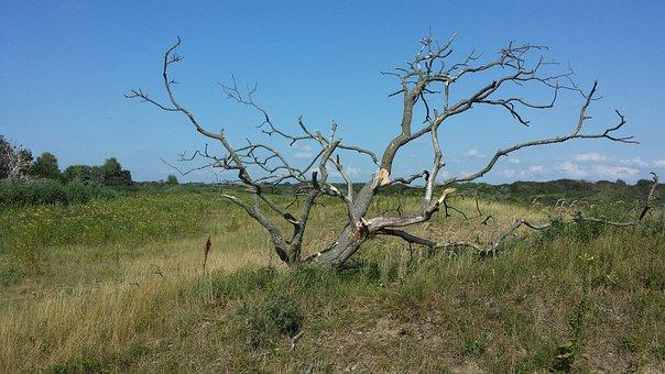 Duigebied, Dead Tree, Open Plain With Tree