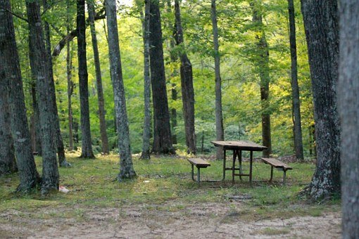 Picnic Table, Table, Woods, Soft Focus, Picnic, Nature