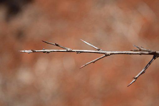 Branch, Arid, Wood, Nature, Tree, Plant, Branches