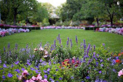 Flowers, Park, Nature, Pretty, Plant, Spring, Blossom
