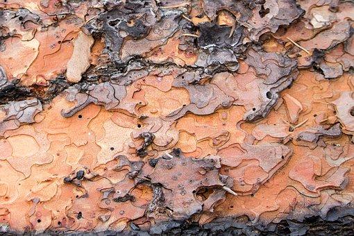 Tree Bark, Puzzle Shapes, Fallen Tree, Fire, Bark