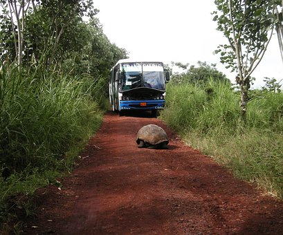 Tortoise, Giant, Water, Road, Bus, Rocks, Island