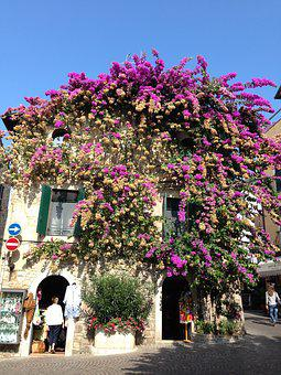Sirmione, Flowers, House