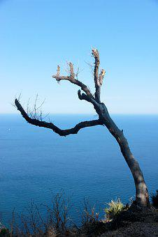 Tree, Water, Sky, Landscape, Lake, Wild, Haunting, Arid