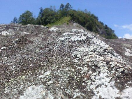 Rock, Sri Lanka, Fungus On Rock, Landscape, Wilderness