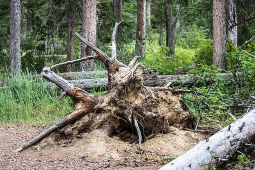 Fallen Tree, Roots, Forest, Clay, Branch, Dead, Timber