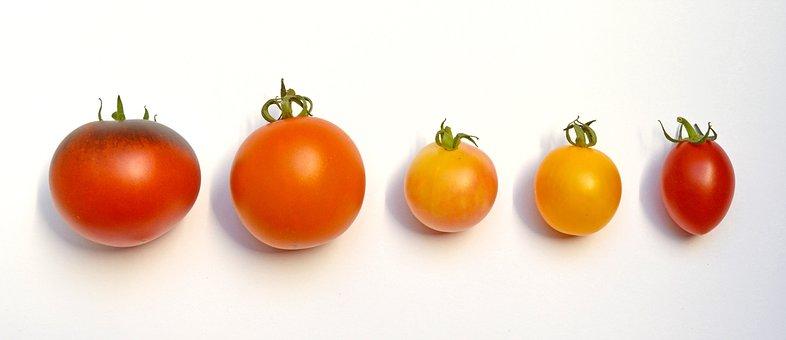 Tomatoes, Tomatoes Locations, Tomato Species