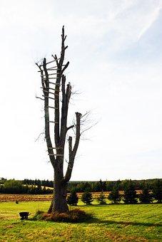 Tree, Dead, Landscape, Old, Silhouette, Ladder