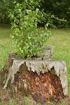 Tree Stump, Tree, Live, Die, Birch, Booking Master