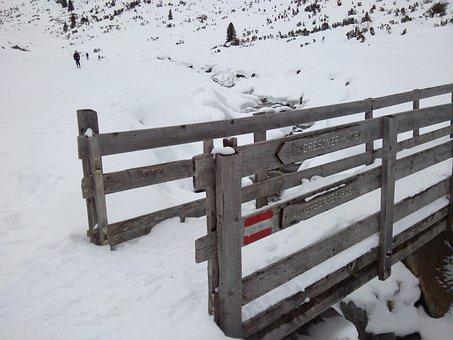 Snow, Winter, Wintry, Winter Shrubs, White