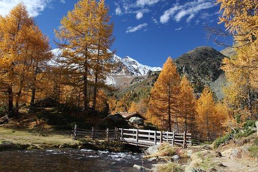 Autumn, Wood, Nature, Tree, Landscape, Alpine