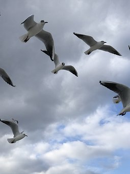 Bird, Seagull, Flight, Animal World