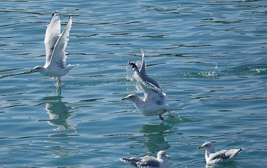 Body Of Water, Bird, The Seagulls In The Bath