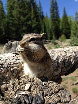 Nature, Outdoors, Wildlife, Wood, Animal, Chipmunk