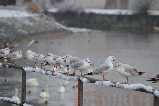 Bird, Waters, Winter, Animal World, Snow, Cold, Ice