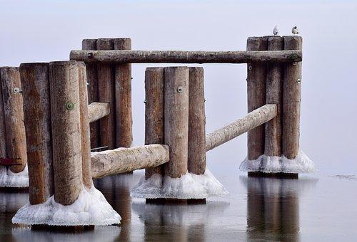 Web, Wood, Ice, Water, Winter, Cold, Wet, Gulls, Frozen