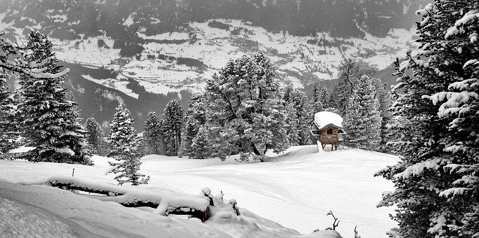 Landscape, Forest, Nature, Trees, Winter, Conifer, Snow