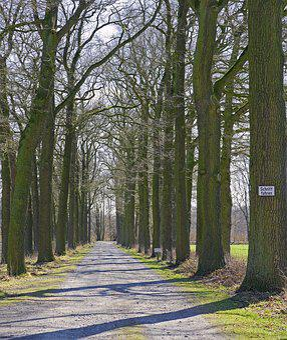 Avenue, Lane, Hofzufahrt, Oak, Double Rows, Wood, Tree