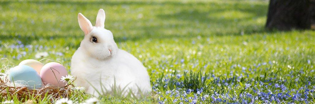 Easter Bunny, Easter Nest, Egg, Colorful, Rabbit, Grass