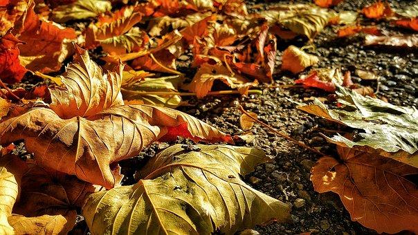 Fall, Nature, Leaf, Food, Season, Gold, Closeup, Autumn