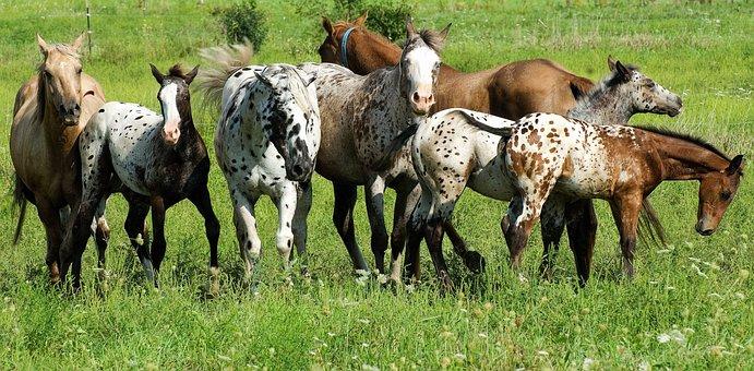 Grass, Animal, Hayfield, Field, Farm, Pasture, Mammal