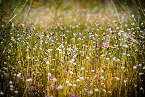 Flowering Grass, Grass, Flowers, By Nature, Flower