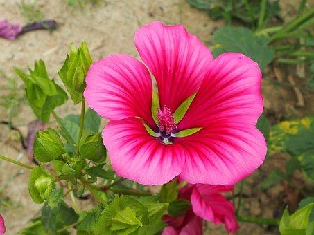 Flower, Nature, Garden, Summer, Bright, Close, Pink