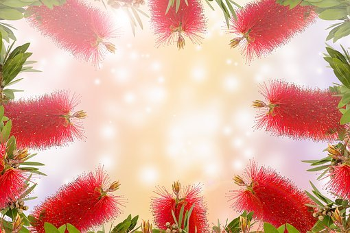 Bottle Brush Flower, Nature, Tree, Bright, Flower