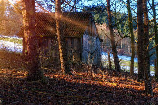 Hut, Cottage, Scale, Forest Lodge, Trees, Forest, Sun