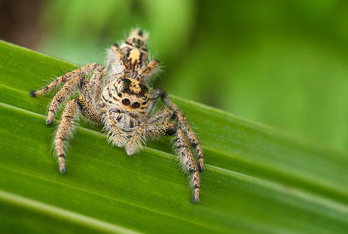 Nature, Insect, Spider, Animal World, Animal, Arachnid