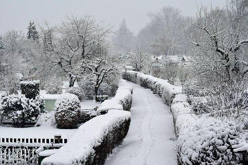 Winter, Snow, Cold, Frost, Allotments, Vegetation, Kahl