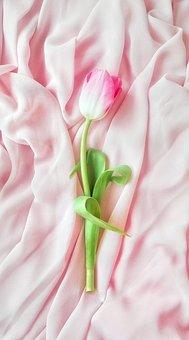 Flower, Plant, Nature, Tulip, Flora, March 8