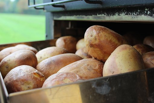 Food, Grow, Market, Baked Potatoes