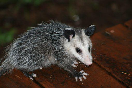 Portrait, Mammal, Nature, Cute, Wildlife, Outdoors