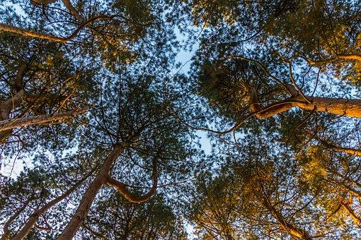 Tree, Nature, Wood, Landscape, Leaf, Season, Branch