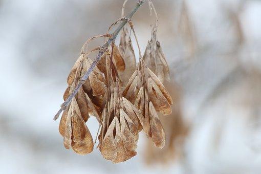 Nature, Dry, Autumn, Plant, Sheet, Season, Krupnyj Plan