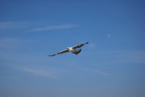 Flight, Aves, Sky, The Earth's Atmosphere, Nature