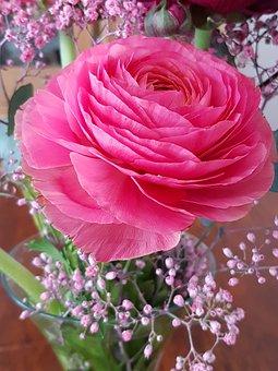Flower, Plant, Petal, Noble Buttercups, Told Buttercup