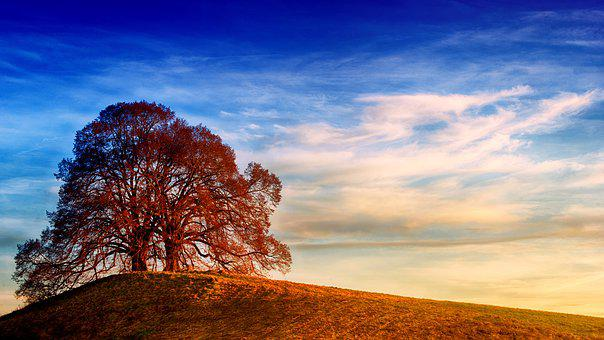 Landscape, Nature, Sky, Panorama, Tree, Hill, Light