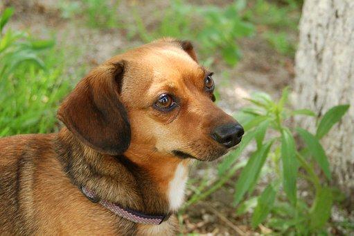 Animals, Dog House, Charming, Pets