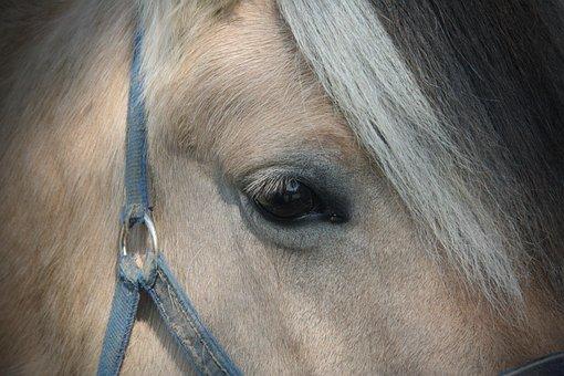 Portrait, Mammal, Animal, Farm, Horse, Eye, Mane