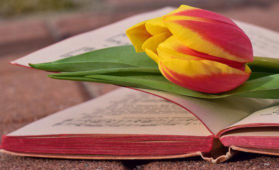 Book, Tulip, Romantic, Blossom, Bloom, Tulpenbluete