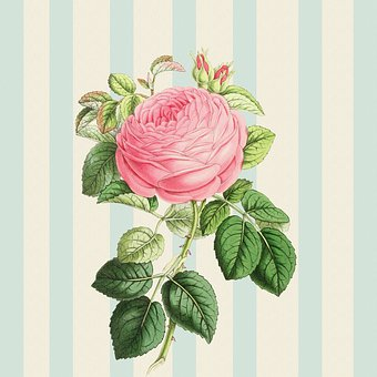 Background, Rose, Pink, Vintage, Shabby Chic, Striped