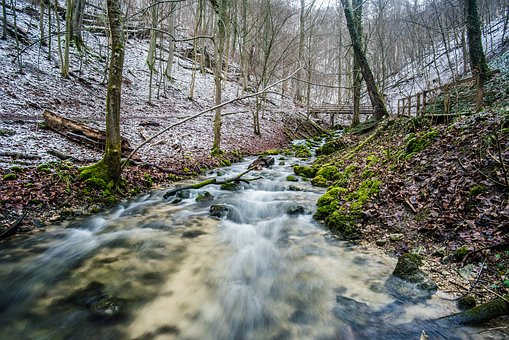 Nature, Waters, River, Wood, Landscape, Tree, Season