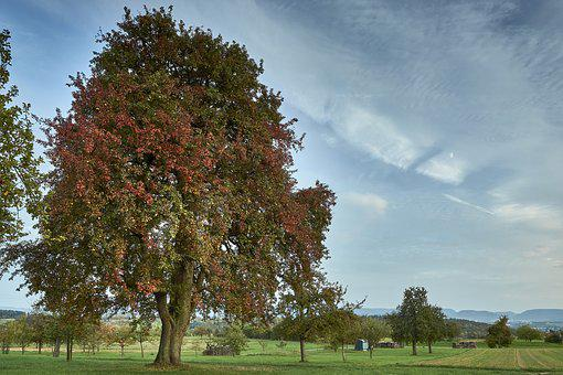 Tree, Nature, Landscape, Grass, Season, Wood, Sky