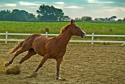 Horse, Farm, Mammal, Equine, Stallion, Animal