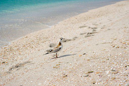 Sand, Nature, Beach, Sea, Summer, Seagull, Crimea