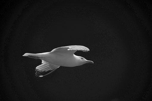 Wildlife, Nature, Water, Sea, Bird, Animal, Gull