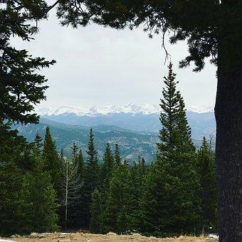 Tree, Wood, Nature, Mountain, Landscape, Colorado